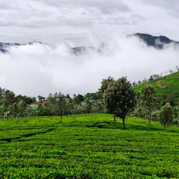 10 Best Coonoor Resorts for a Dreamy Vacation