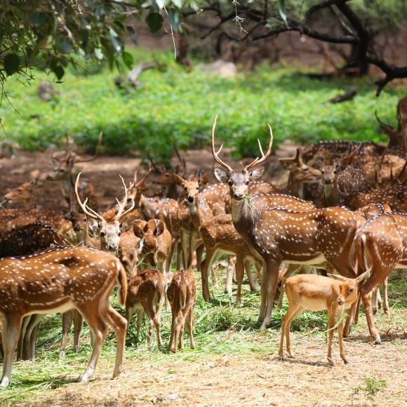 Dandeli Wildlife Sanctuary Guide