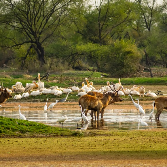 Top 10 Wildlife Sanctuaries in Odisha