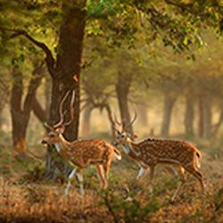Bhamragarh Wildlife Sanctuary