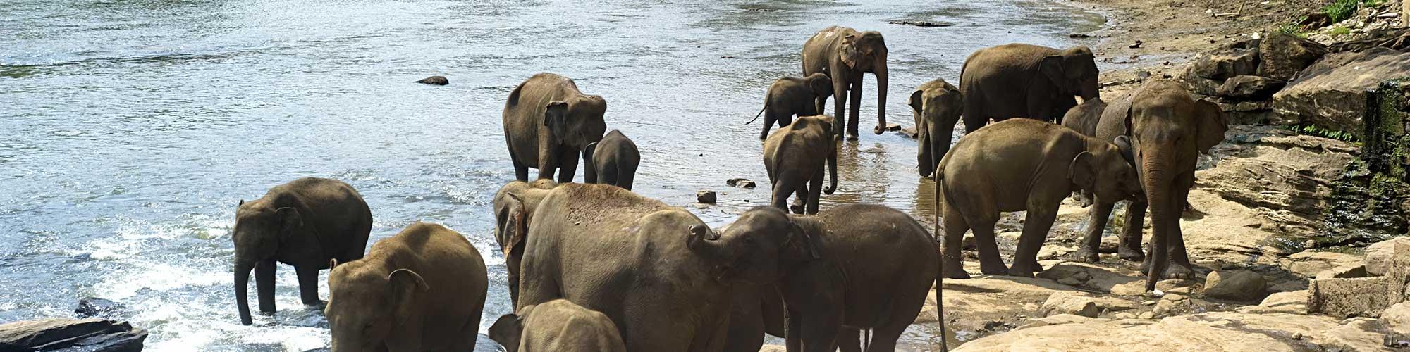 6 Best Wildlife Sanctuaries In Maharashtra To Explore