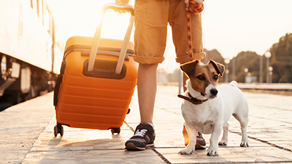 Things To Carry With You If traveling With Pet