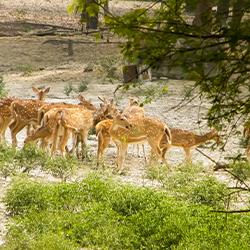 Bhadra Wildlife Sanctuary, Karnataka