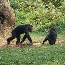 Landfall Island Wildlife Sanctuary, Andaman