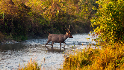 Top 20 Wildlife Sanctuary in India